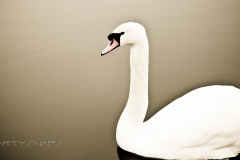 Wineport Lodge Swan
